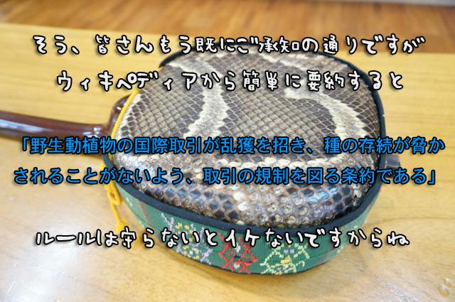 DSC00381_2